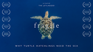 Fragile TurtleHatchlings